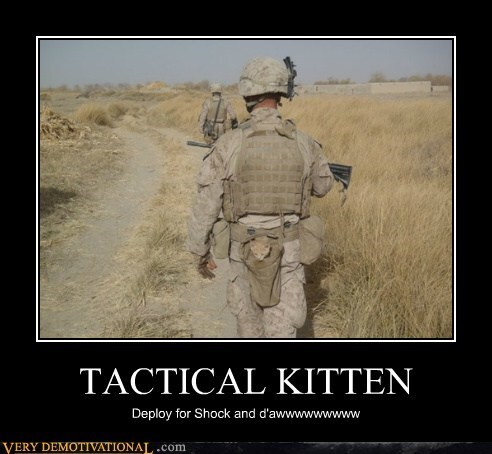 Click image for larger version  Name:tactical-kitten.jpg Views:106 Size:45.2 KB ID:47292